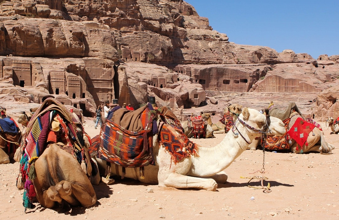 Camels are everywhere since many travelers get too tired to walk