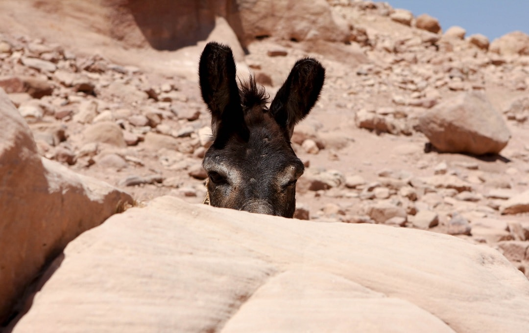 This donkey looks like he's up to no good