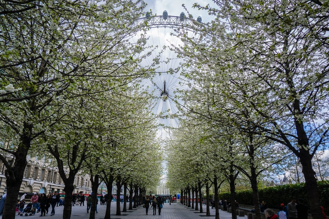 Must see Places in London Eye