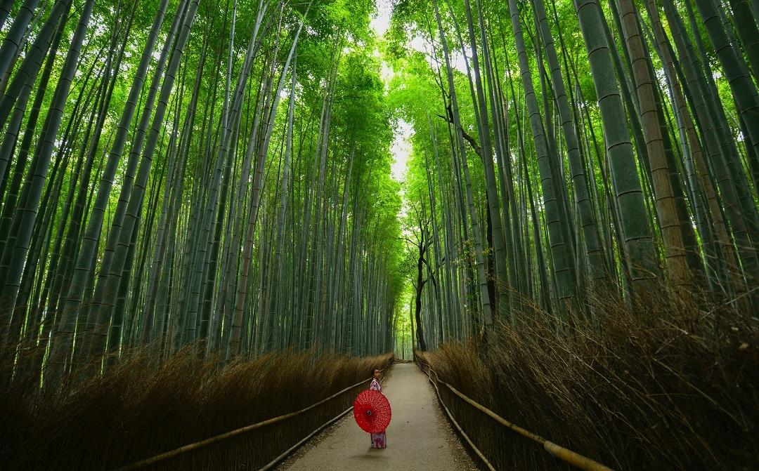 kyoto itinerary arashiyama