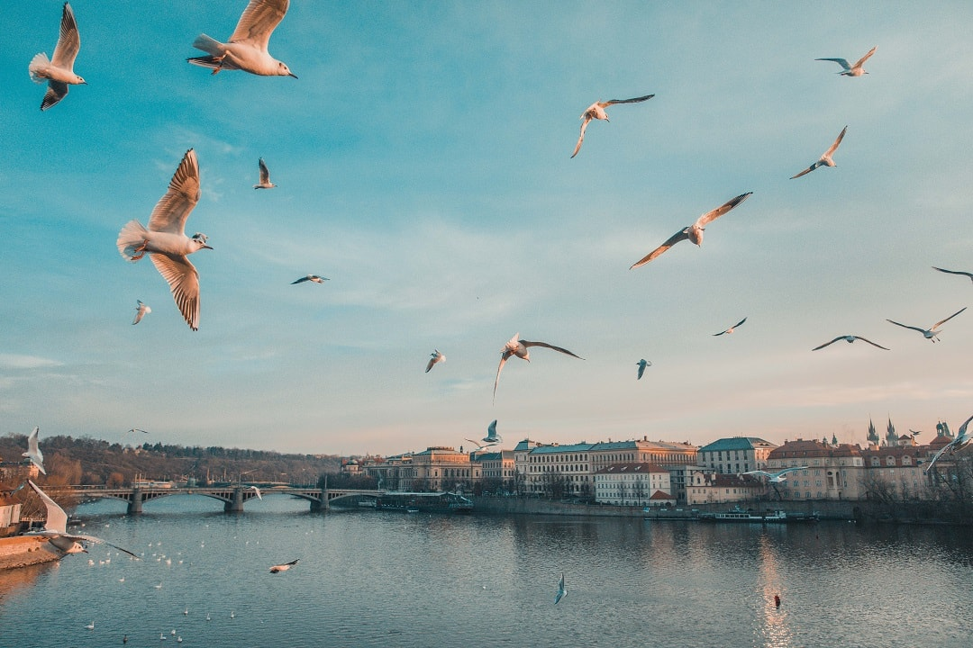How much does it cost to go to Prague birds