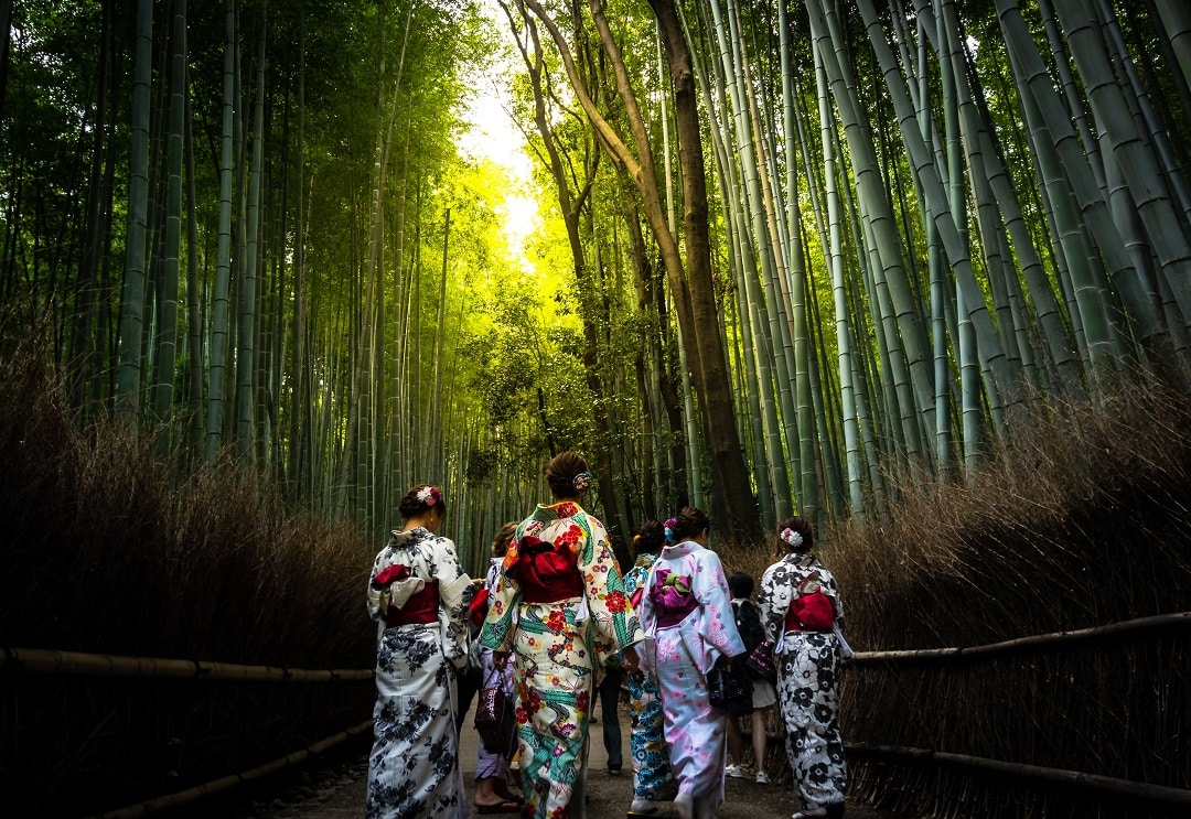 how-much-does-it-cost-to-go-to-Kyoto-bamboo
