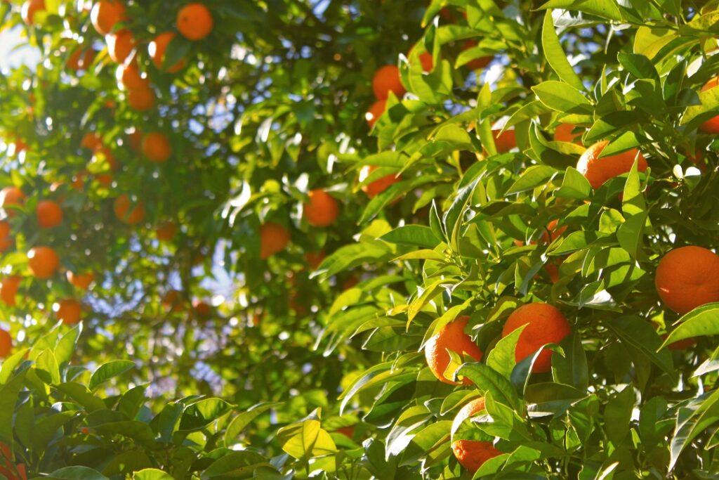 Tangerine ETF review